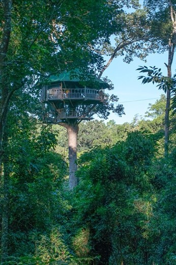 Our treehouse home for the night - 150 feet off the ground!