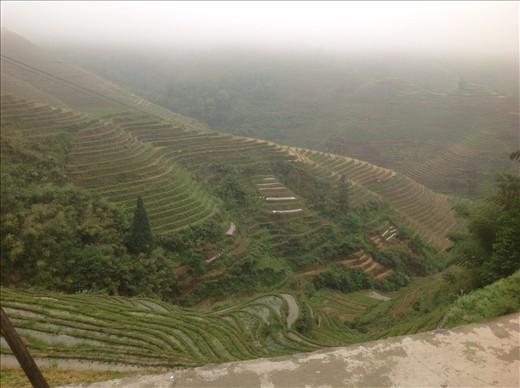 Dragon back rice terraces