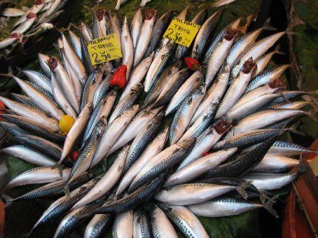 Fish Markets at Kadakoy