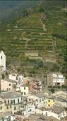 The hillsides of Vernazza. Wine grapes on the hillside: by colandscott, Views[138]