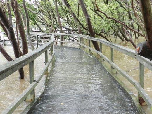 This bridge was flooded by all the rain. I walked across anyway.