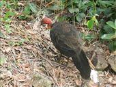 Wild turkey!: by colin_s, Views[428]