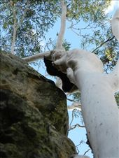 The tree grew into the cliff, then some stone eroded away.: by colin_s, Views[165]