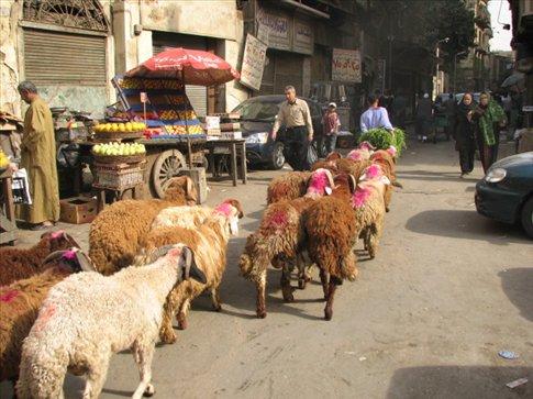 Random shots of the streets of Cairo
