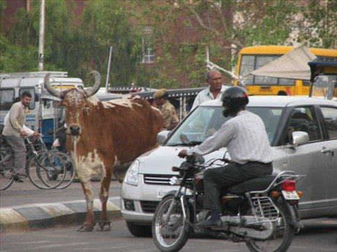 Random street shot, Ranakpur