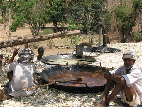Random village shot of locals making jeggary, a thick syrup made of sugar cane