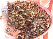 Fried grasshoppers: by colleen_finn, Views[1688]