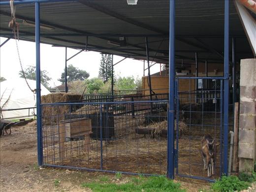 Permaculture farm near Galilee