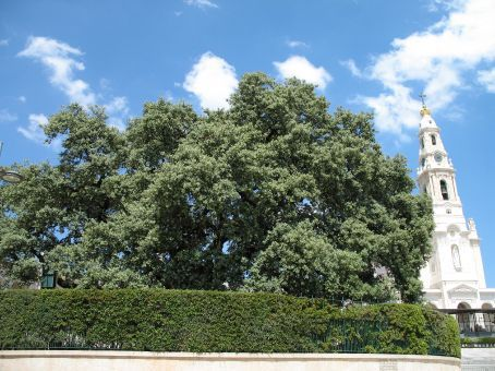 The oak tree upon which the Virgin de Fatima appeared in a vision