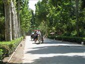 Plaza de Espana gardens: by colleen_finn, Views[488]
