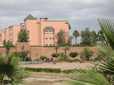 More dromedaries in Marrakesh