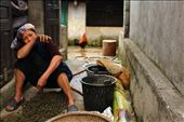 This woman just collected all these snails to sell at a village market next morning. : by colorful-life, Views[154]