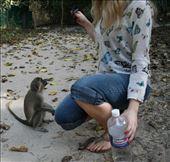 monkey!: by compassrose, Views[41]