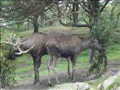 Moose: by connie_elman, Views[177]