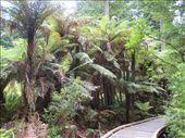 Rotorua: by courtneycarmen, Views[89]