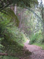 Rotorua: by courtneycarmen, Views[71]