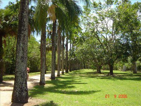 Missa Suvi luuraa??? Cairns Botanical Gardens