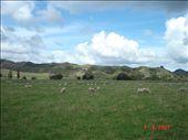 Uudessa-seelannissa on 4 miljoonaa asukasta ja 40 miljoonaa lammasta. : by crazyfinns, Views[385]