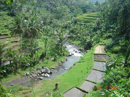 Ubudin maisemia, Bali.