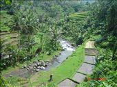 Ubudin maisemia, Bali.: by crazyfinns, Views[358]