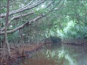 Mangrovemetsaa.: by crazyfinns, Views[310]