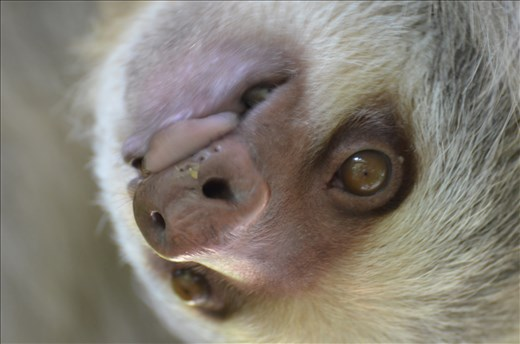 A slow sloth