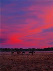 The Station horses enjoy the pre-dawnlight show.: by crocbait, Views[320]