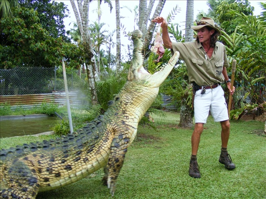 Henry, Johnstone river crocodile farm