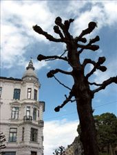 Oslo has these crazy trees that seem to have no small branches or twigs.  I imagine that in summer all the leaves sprout directly from the lumpy branches.: by crustyadventures, Views[767]