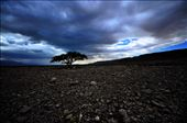 Loneliness - the desert the Dead Sea area is difficult and even cruel and theref: by d-winter, Views[249]