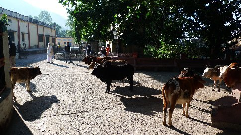 rishikesh/ramjula - eine strasse