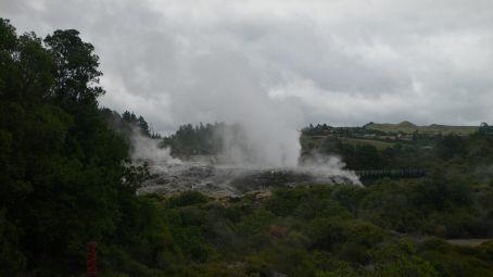 Geisher in Rotorua, NZ