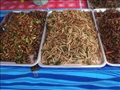 Meal worms and everything else : Fear Factor! at Krabi's night market: by daisyrockette, Views[1032]