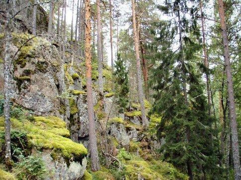 The forest near Lappeenranta