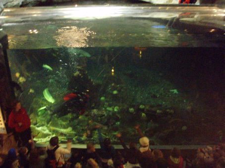 One of the large tanks in the aquarium.  A diver can be seen in red helping out with a talk that was being given