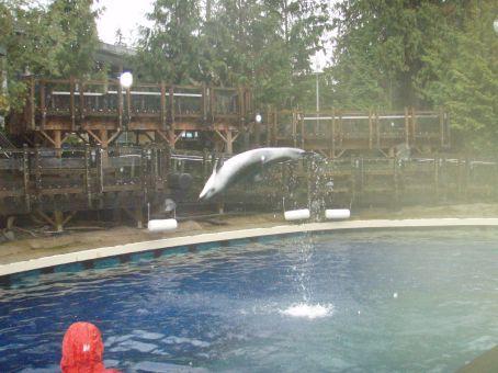 Dolphin having fun
