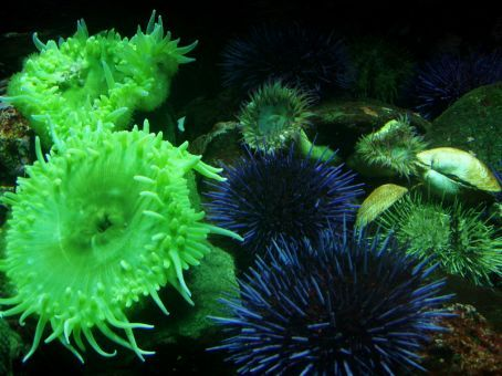 Various sea life that is found in the bay of vancouver