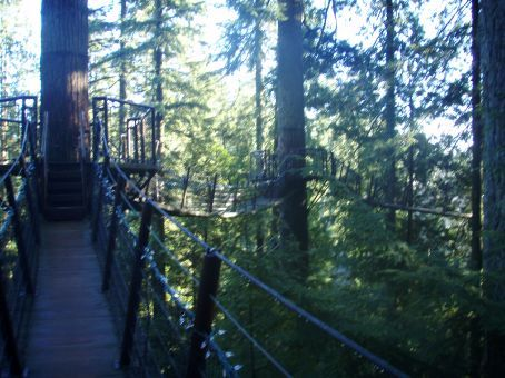 Part of the Tree Top Walkway thru the Duglas Firs