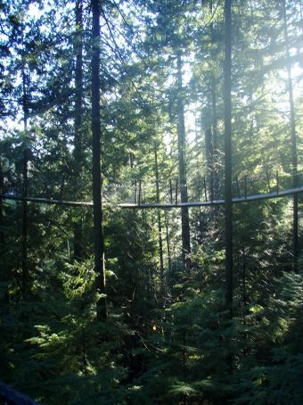 The Tree Top Walkway is up to 100 feet above the ground