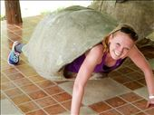 Danielle trying on a turtle shell for size. She says this is her spirit animal. : by danidawnandstevo, Views[66]