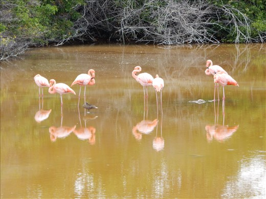 Some flamingos hanging out just down from our hotel.