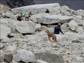 There was a fox wandering around at the top of Torres del Paine. : by danidawnandstevo, Views[189]