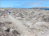 Isla Damas or as I call it Scrub Island. All we saw were gulls, vultures and cactus. : by danidawnandstevo, Views[186]