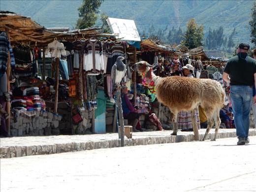 Llama and hawk at the market.