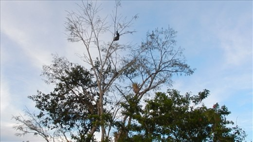 We spotted a sloth high up in a tree.