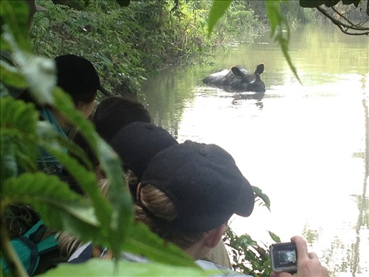 After riding in the canoe we took a hike through the jungle and came across a rhino cooling off in the river.
