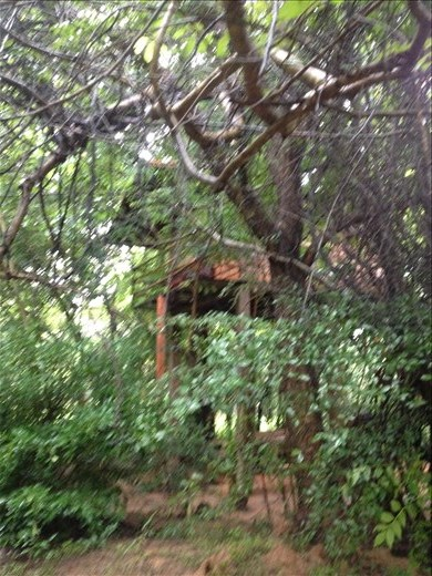 Our hotel for the night is a tree house.