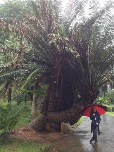 A visit to the Sri Dalada Maligawa Royal Botonical Gardens in Kandy.