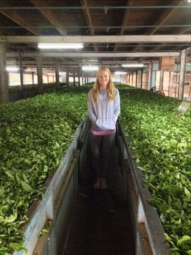 A visit to Craigie Lea Estate tea factory.