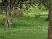Safari monkeys and deer. : by danidawnandstevo, Views[119]